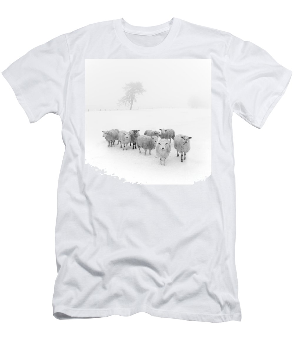 Sheep In Winter Men's T-Shirt (Athletic Fit) featuring the photograph Winter Woollies by Janet Burdon