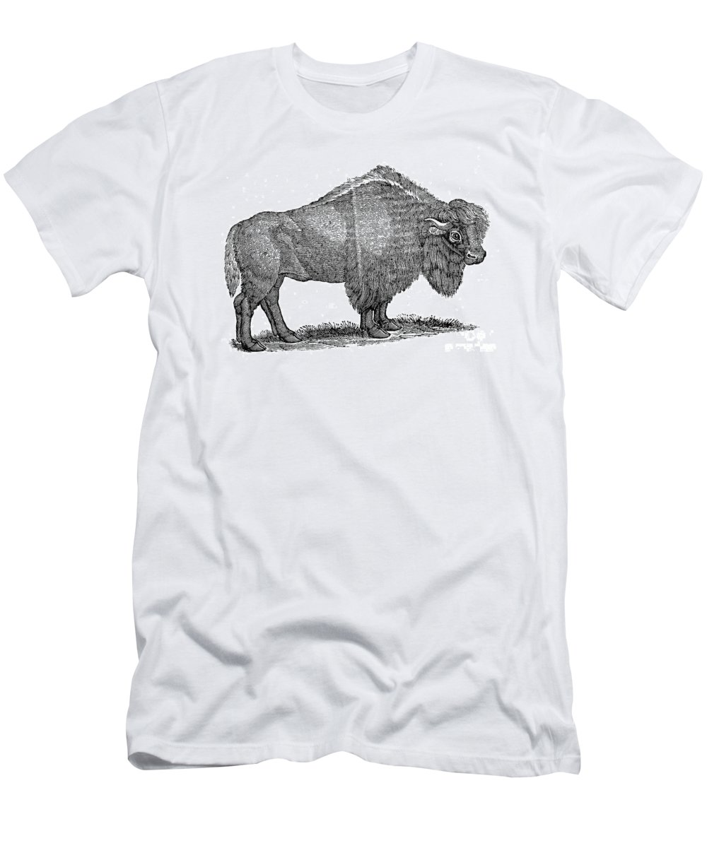1840 Men's T-Shirt (Athletic Fit) featuring the photograph American Buffalo by Granger