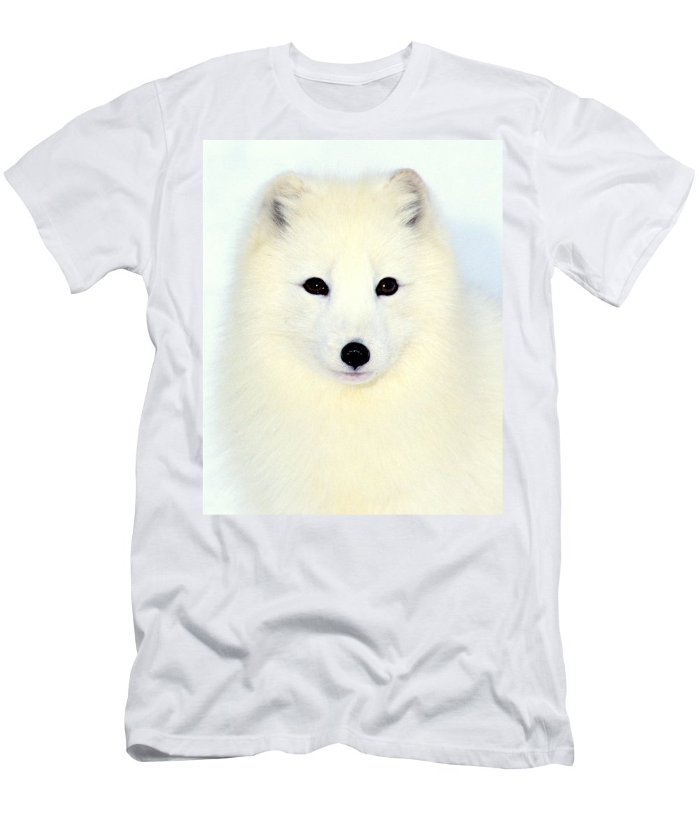 Arctic Fox Men's T-Shirt (Athletic Fit) featuring the photograph Arctic Fox In Snow by Larry Allan