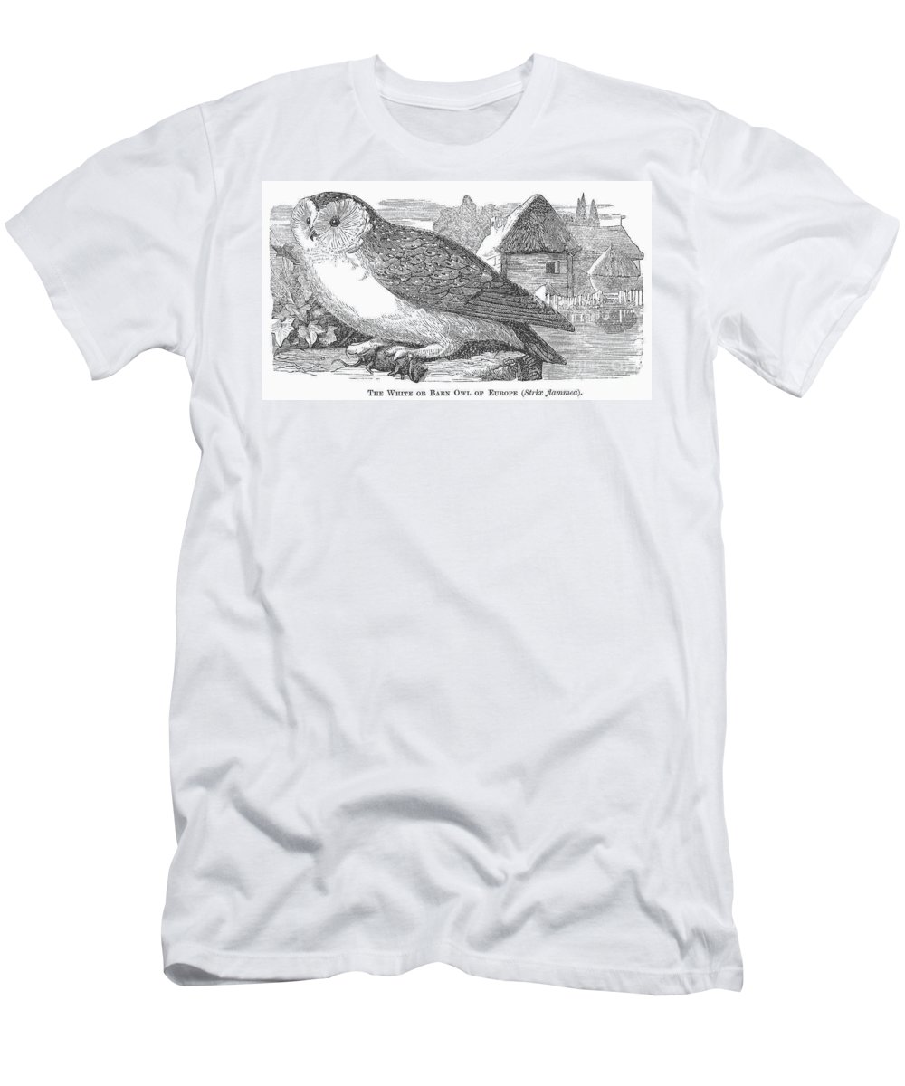 1877 Men's T-Shirt (Athletic Fit) featuring the photograph Barn Owl, 1877 by Granger