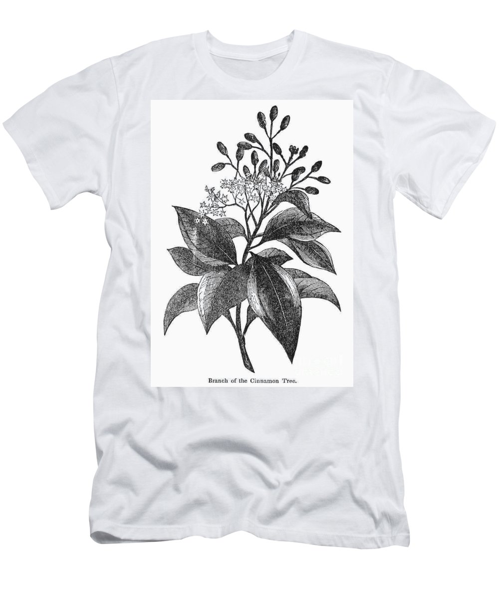 Biology Men's T-Shirt (Athletic Fit) featuring the photograph Botany: Cinnamon Tree by Granger