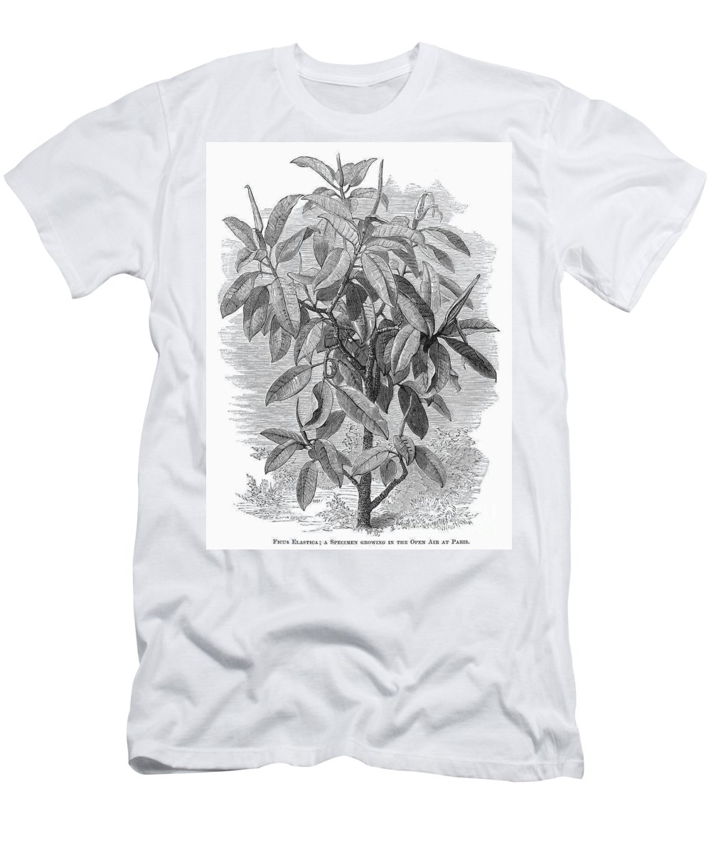 19th Century Men's T-Shirt (Athletic Fit) featuring the photograph Botany: Ficus Elastica by Granger