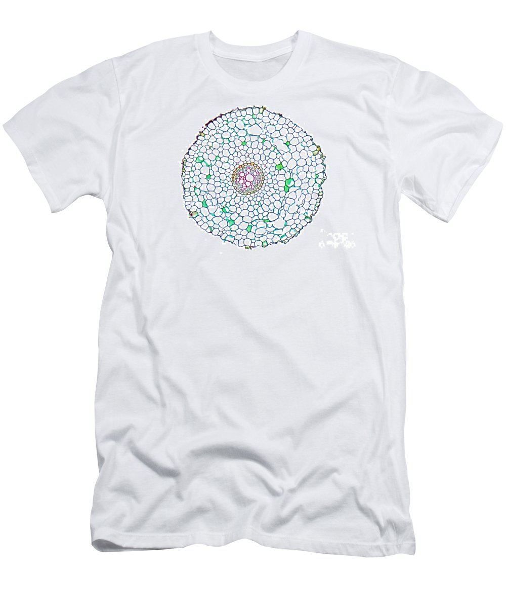 Histology Men's T-Shirt (Athletic Fit) featuring the photograph Buttercup Ranunculus Young Root by M. I. Walker
