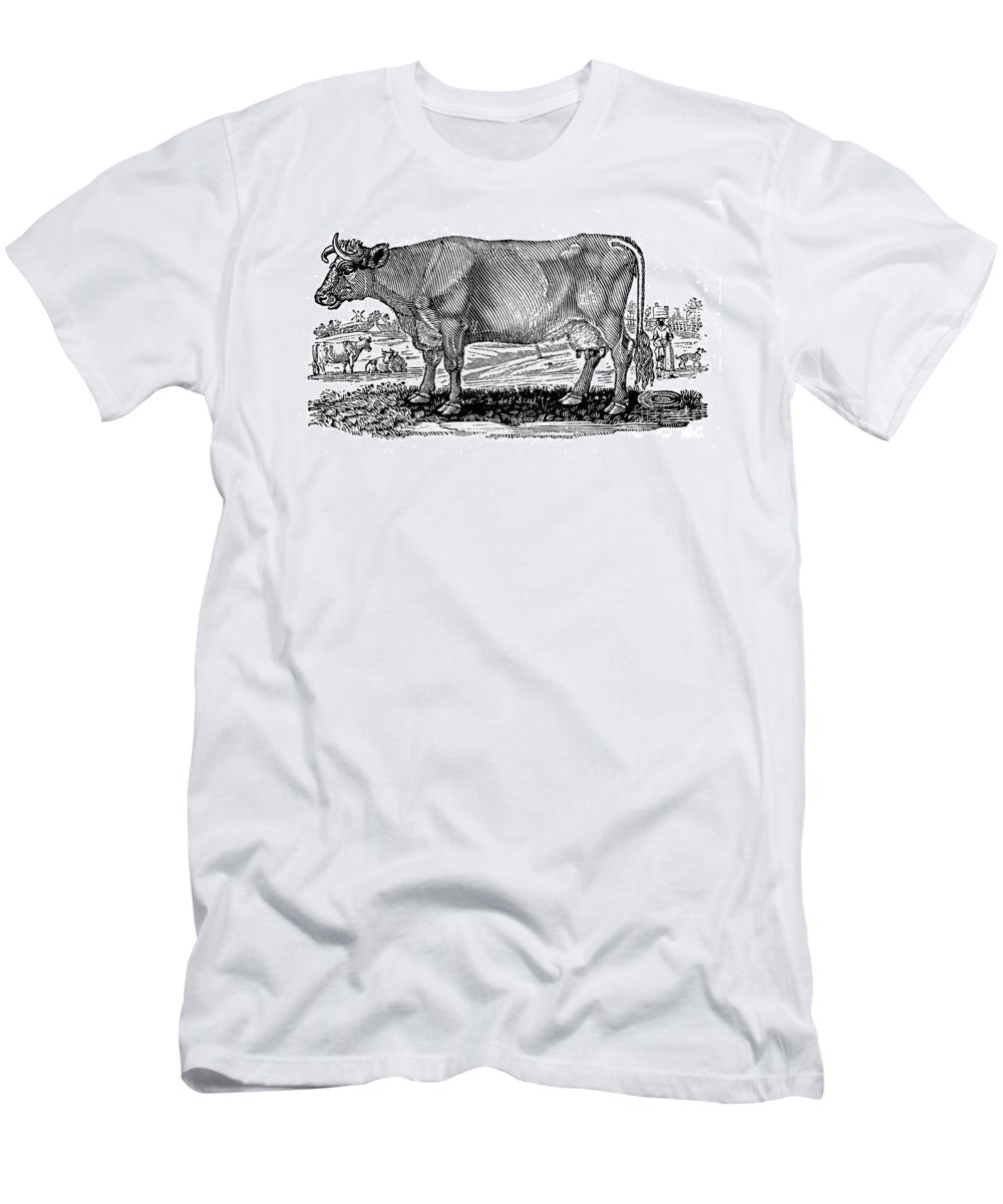1790 Men's T-Shirt (Athletic Fit) featuring the photograph Cattle by Granger