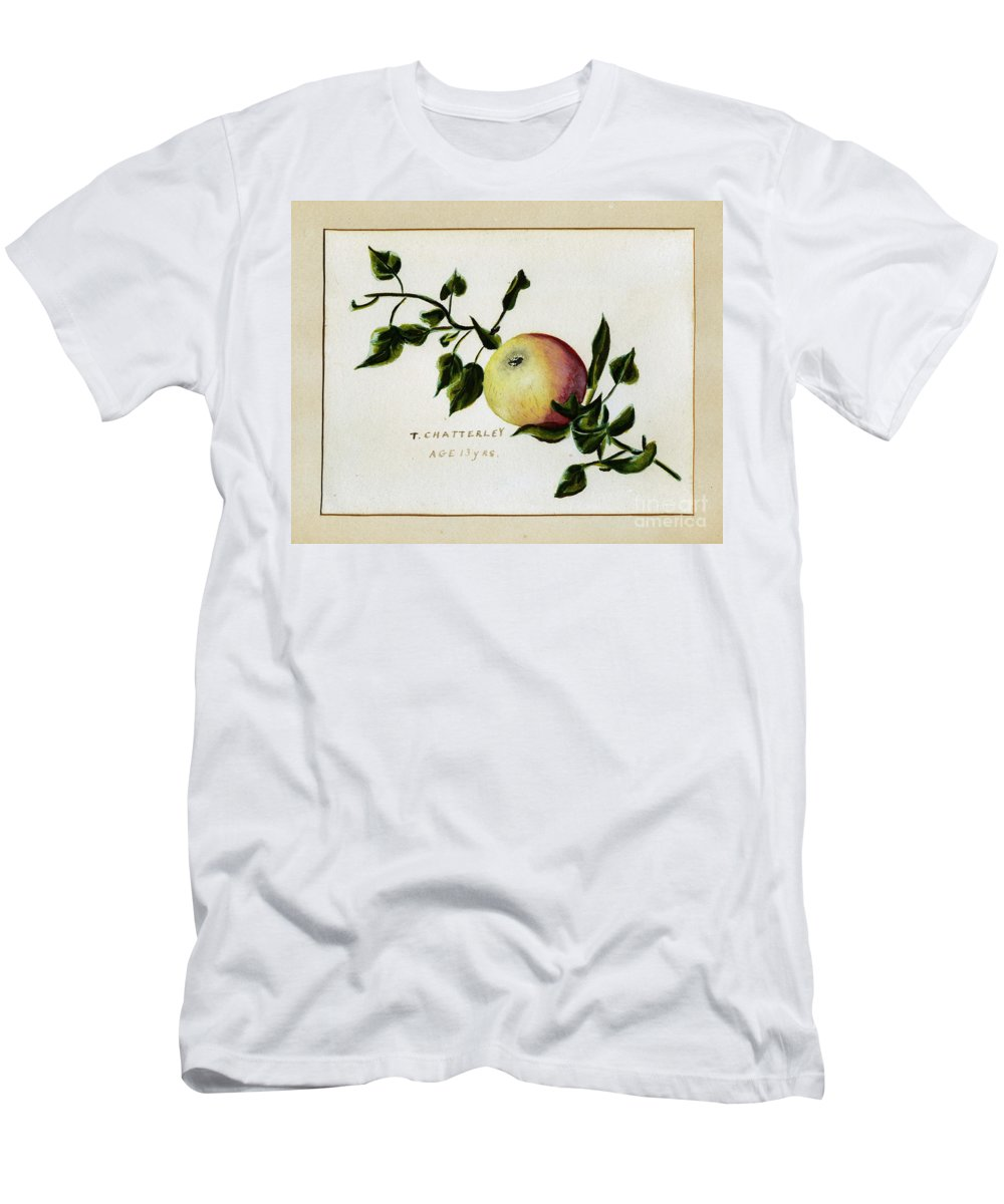 Watercolour Men's T-Shirt (Athletic Fit) featuring the painting Coxs Apple 1922 by John Chatterley