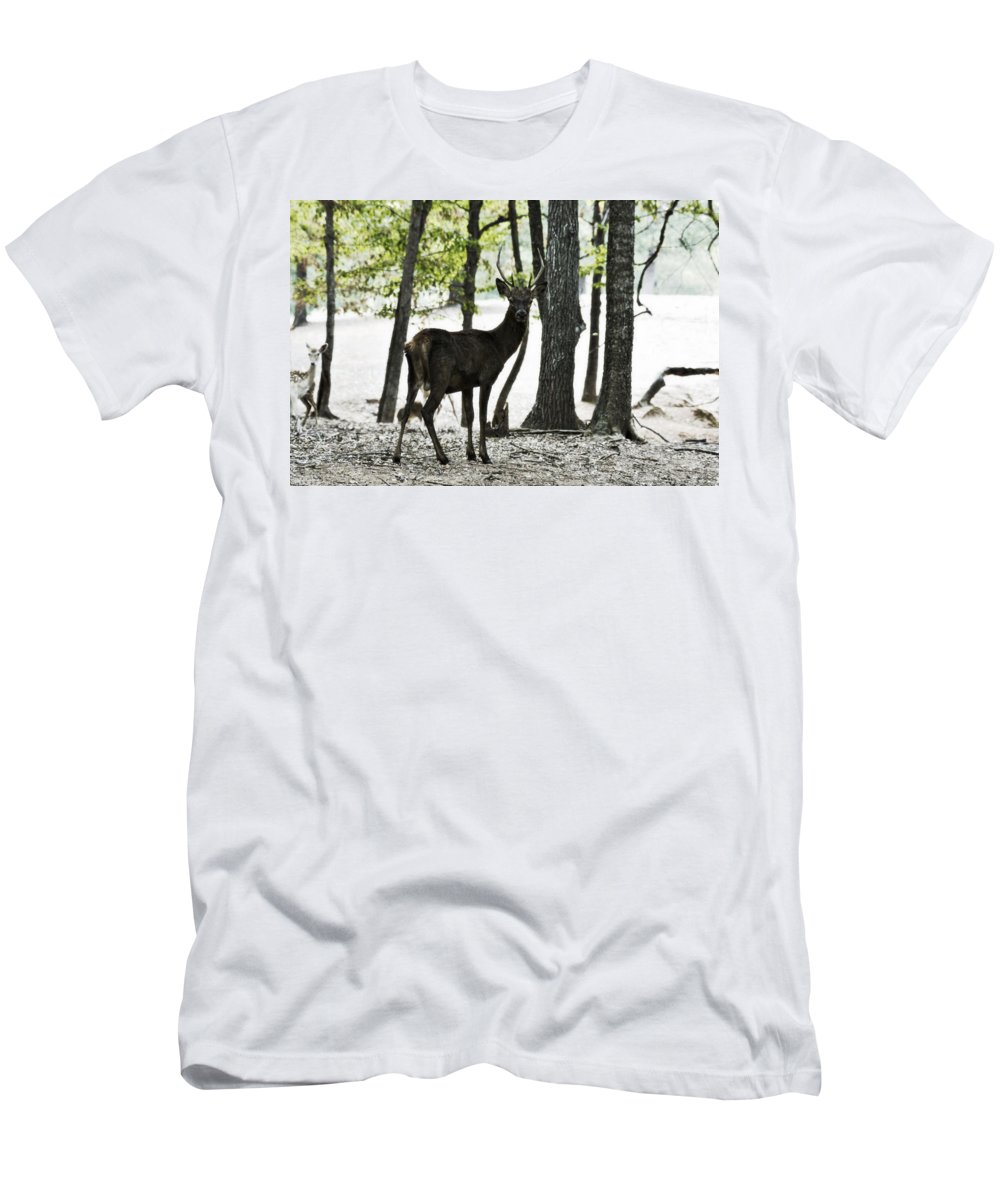 Red Deer Men's T-Shirt (Athletic Fit) featuring the photograph Deer In The Woods by Douglas Barnard
