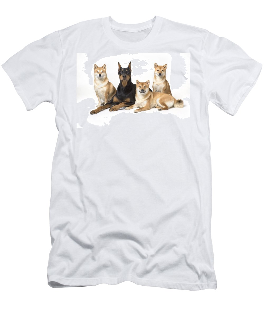 Animal Men's T-Shirt (Athletic Fit) featuring the photograph Doberman Pinscher And Friends by Corey Hochachka