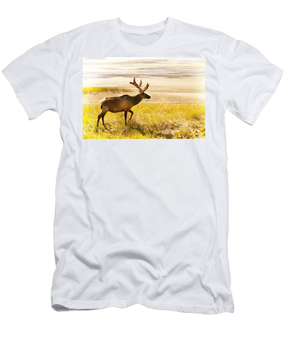 Field Men's T-Shirt (Athletic Fit) featuring the photograph Elk Wanders On Yellow Landscape by Con Tanasiuk