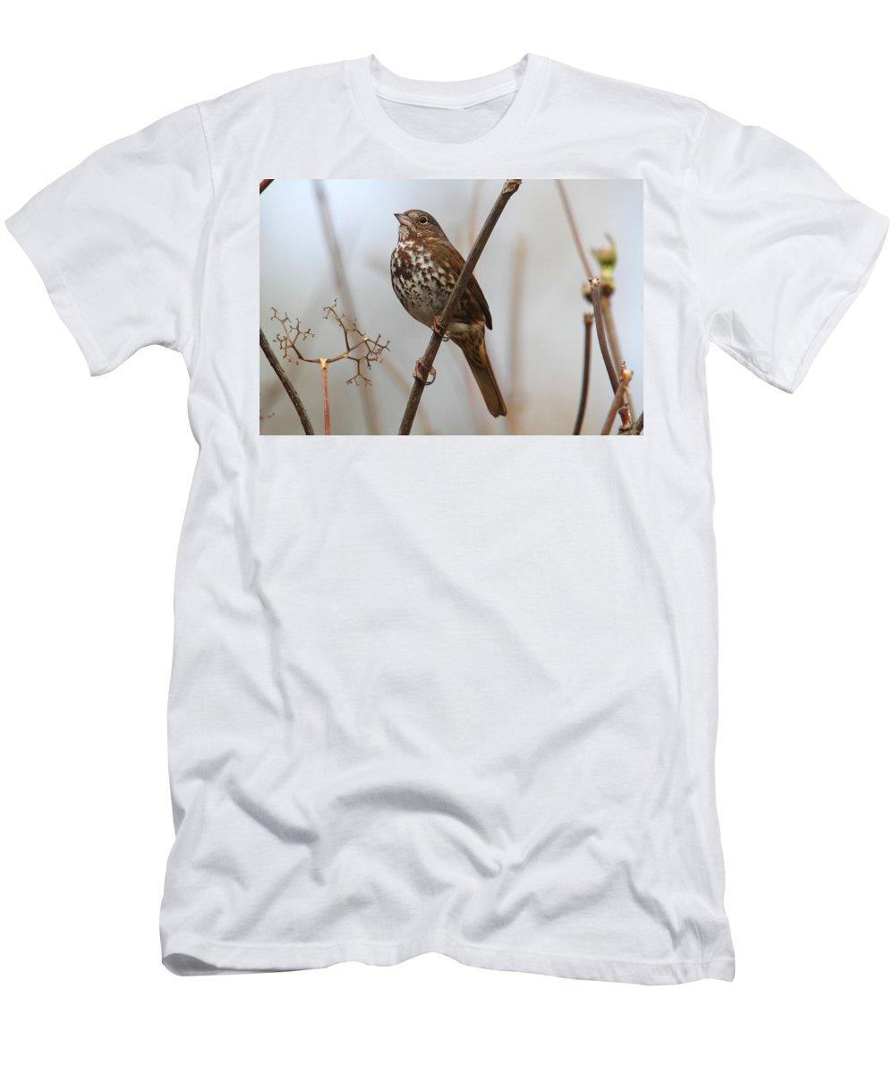 Doug Lloyd Men's T-Shirt (Athletic Fit) featuring the photograph Foggy Fox by Doug Lloyd