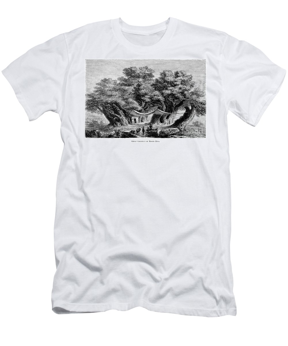 1873 Men's T-Shirt (Athletic Fit) featuring the photograph Great Chestnut Tree by Granger