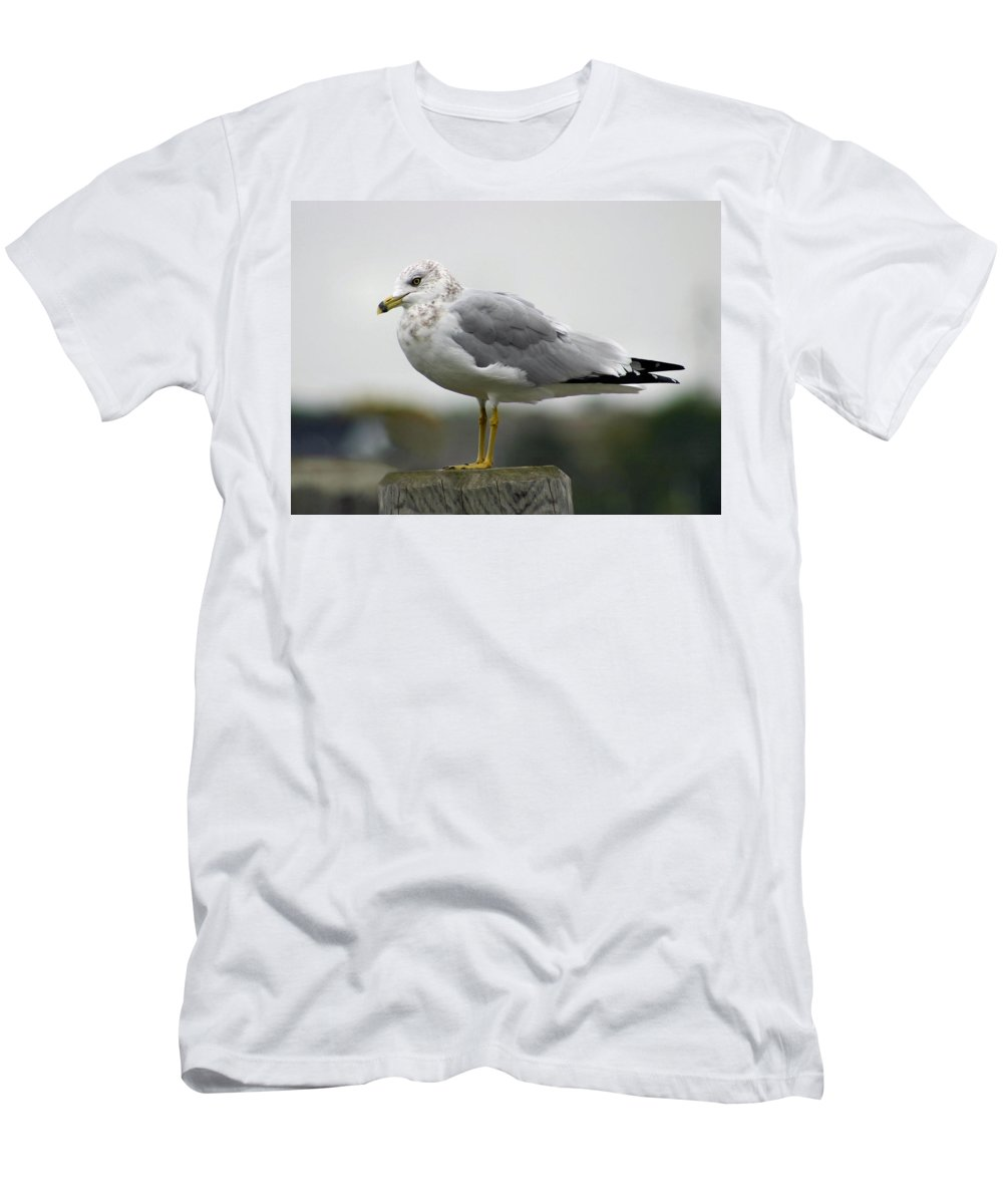 Seagull Men's T-Shirt (Athletic Fit) featuring the photograph Gullwatch by Kristin Elmquist