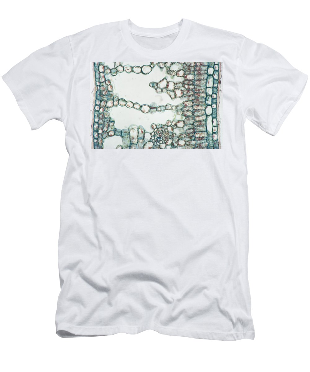 Leaf Men's T-Shirt (Athletic Fit) featuring the photograph Holly Leaf Palisade Cells by M. I. Walker