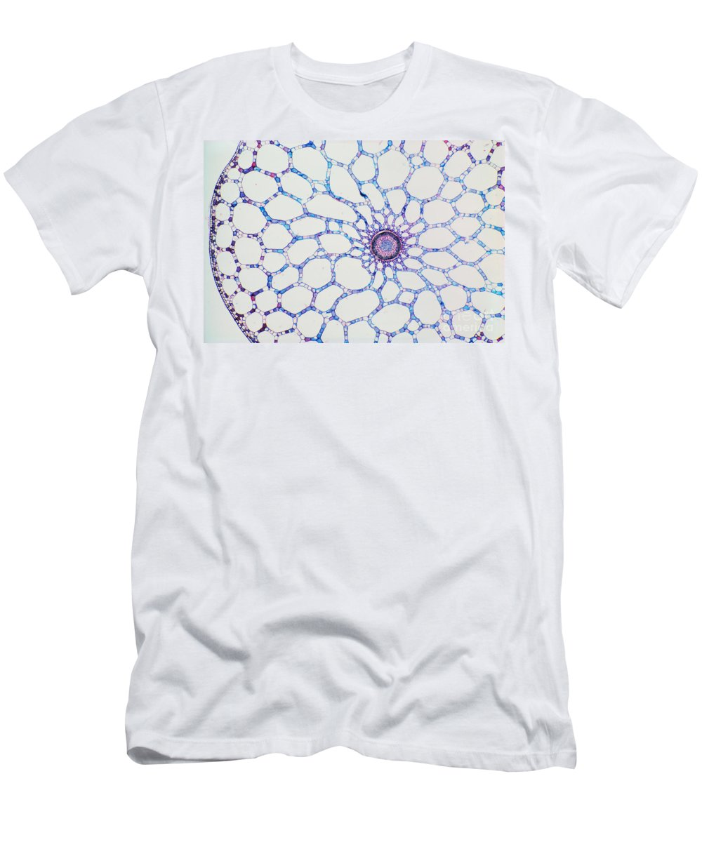 Stem Men's T-Shirt (Athletic Fit) featuring the photograph Hydrophyte Stem And Aerenchyma by M. I. Walker