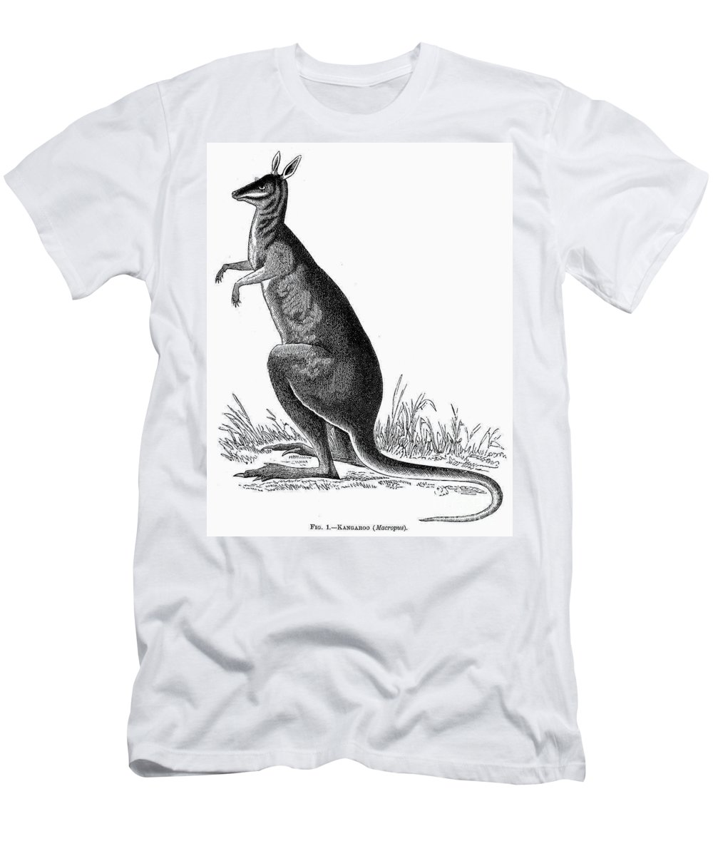 19th Century Men's T-Shirt (Athletic Fit) featuring the photograph Kangaroo by Granger