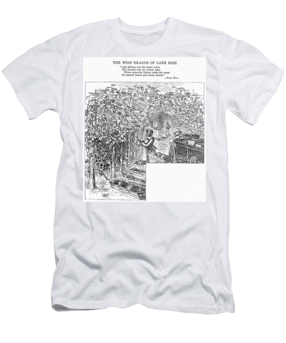 1873 Men's T-Shirt (Athletic Fit) featuring the photograph Lake Erie: Vineyard, 1873 by Granger