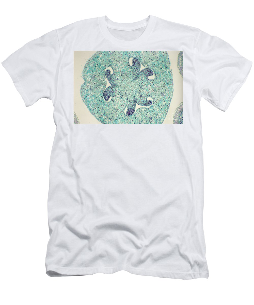 Science Men's T-Shirt (Athletic Fit) featuring the photograph Lily Ovary Lm by M. I. Walker