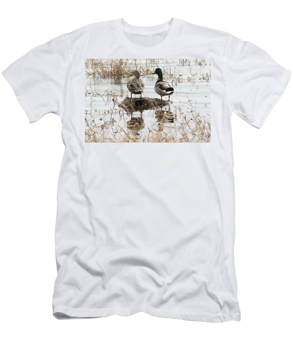 Mallard Men's T-Shirt (Athletic Fit) featuring the photograph Mallard Ducks Standing On A Rock by Lori Tordsen