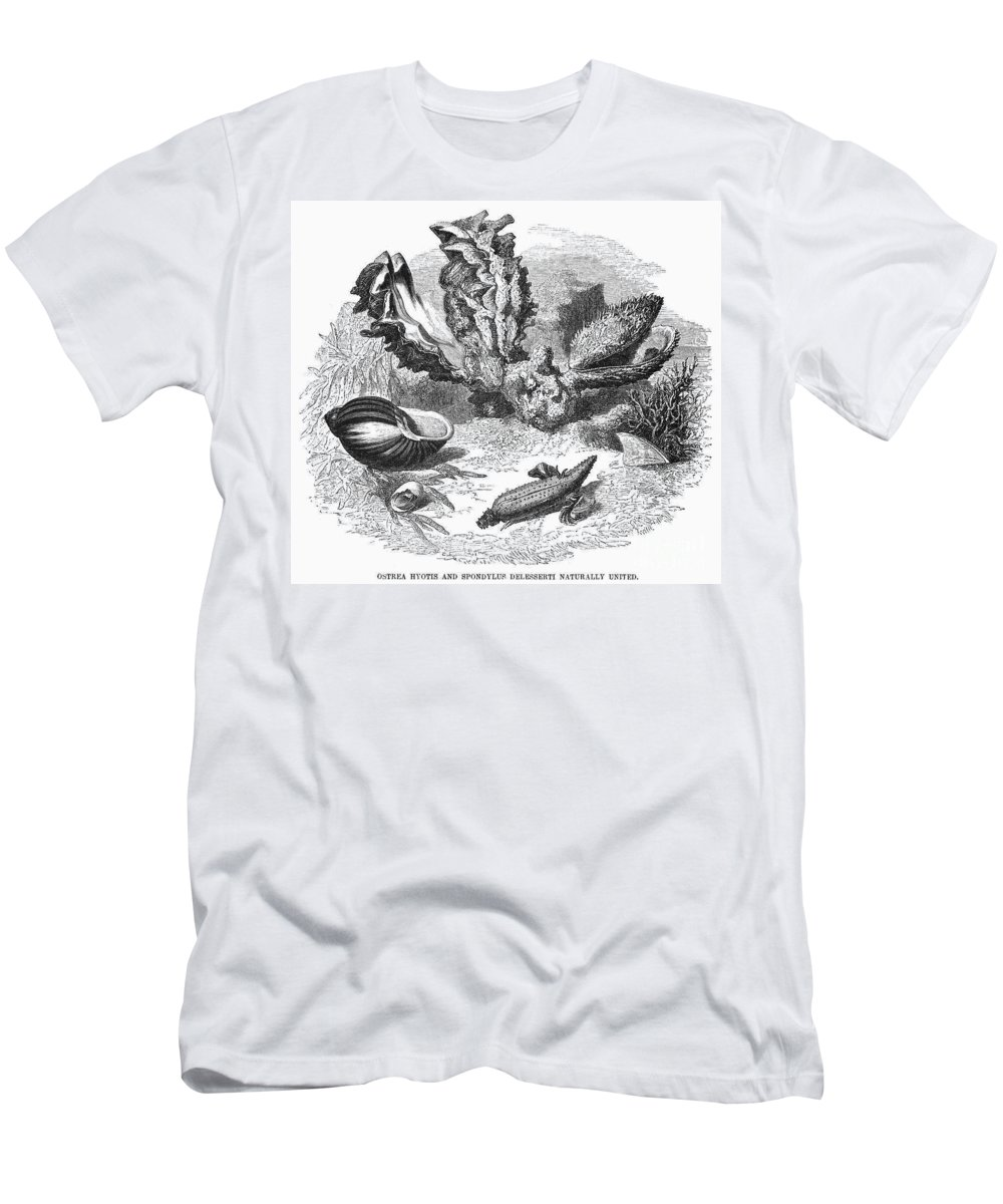 19th Century Men's T-Shirt (Athletic Fit) featuring the photograph Mollusk by Granger