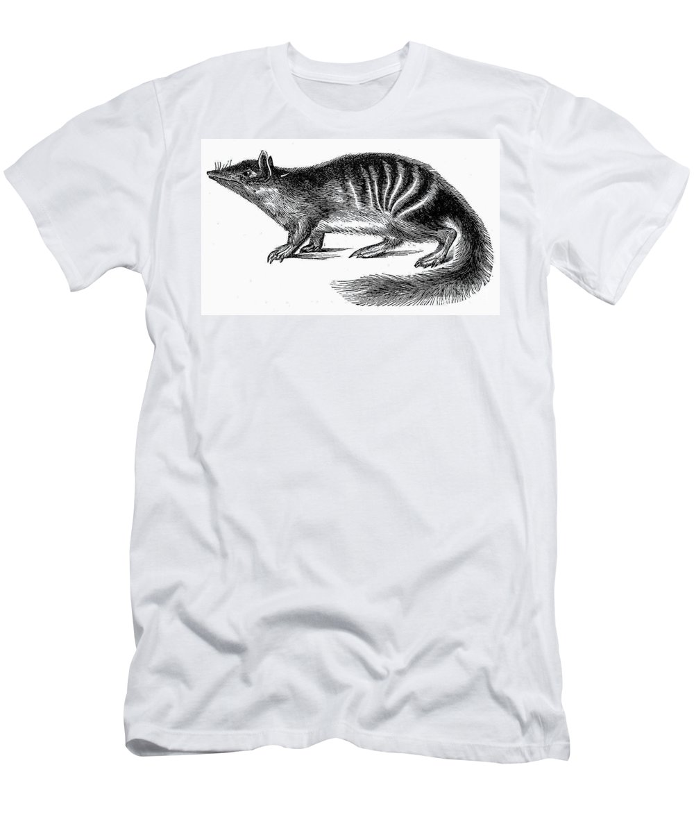 19th Century Men's T-Shirt (Athletic Fit) featuring the photograph Numbat by Granger