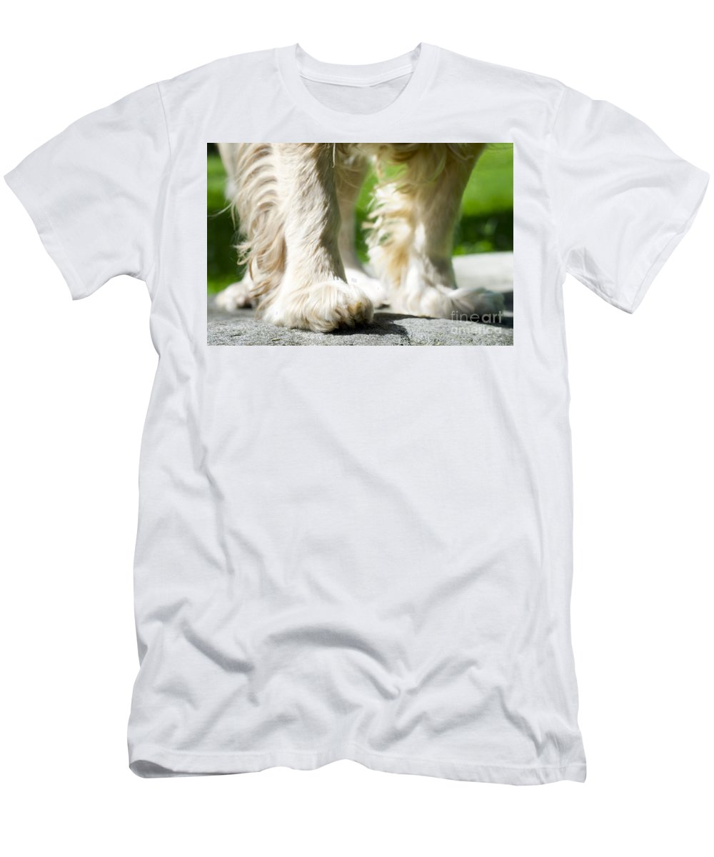 Dog Men's T-Shirt (Athletic Fit) featuring the photograph Paw by Mats Silvan