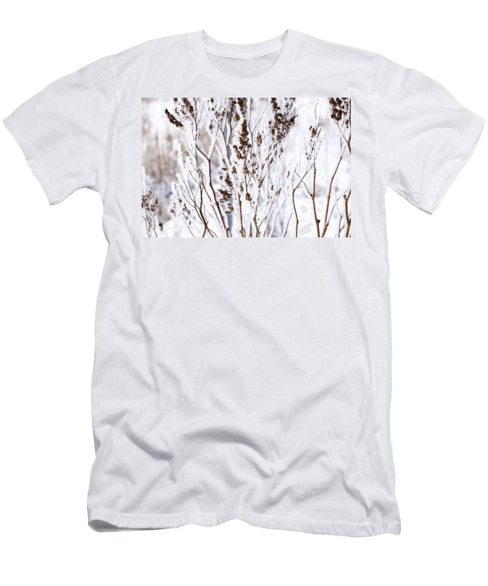 Fresh Snow Men's T-Shirt (Athletic Fit) featuring the photograph Plants In Winter by David Chapman