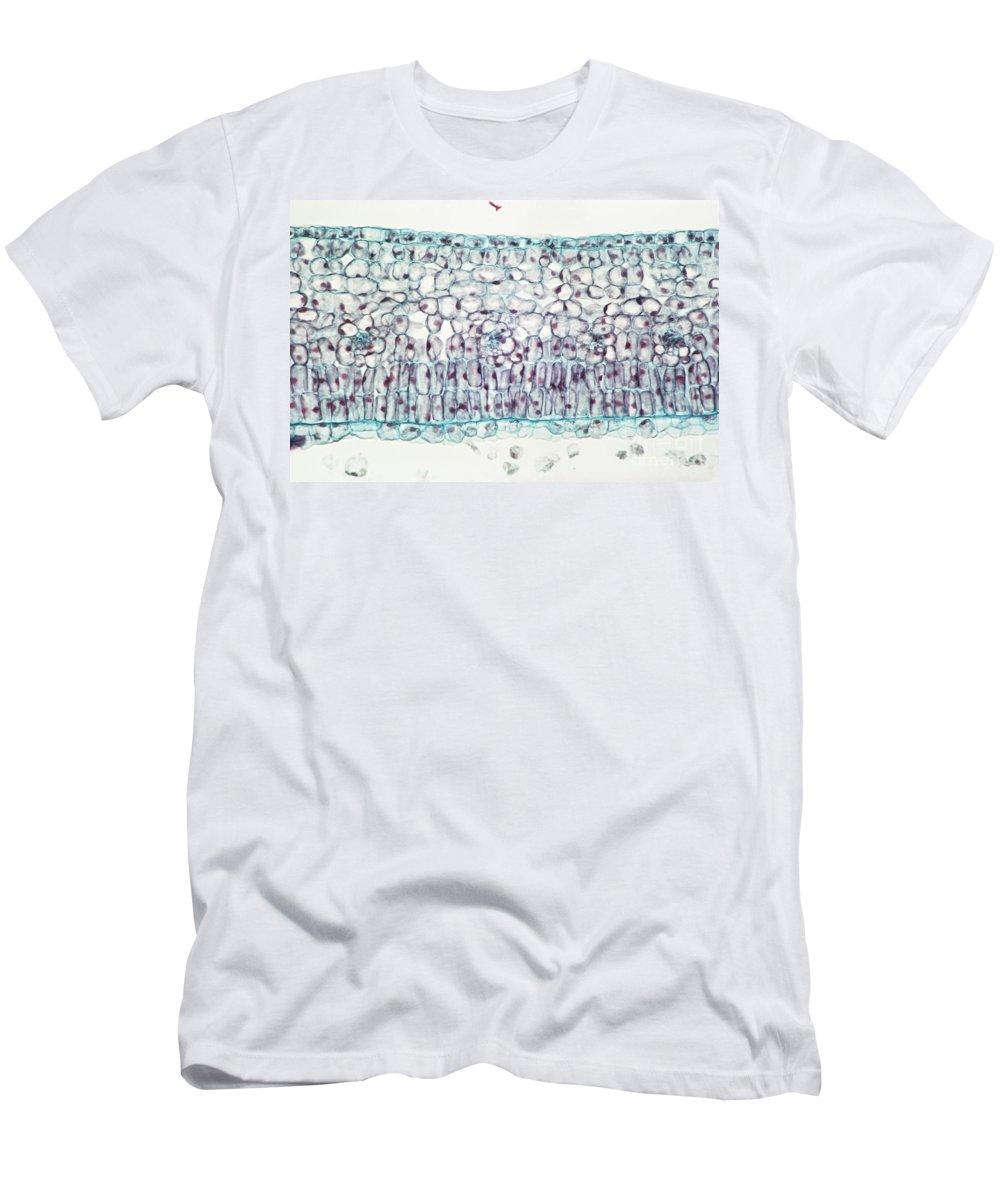 Leaf Men's T-Shirt (Athletic Fit) featuring the photograph Privet Leaf Palisade Cells by M. I. Walker
