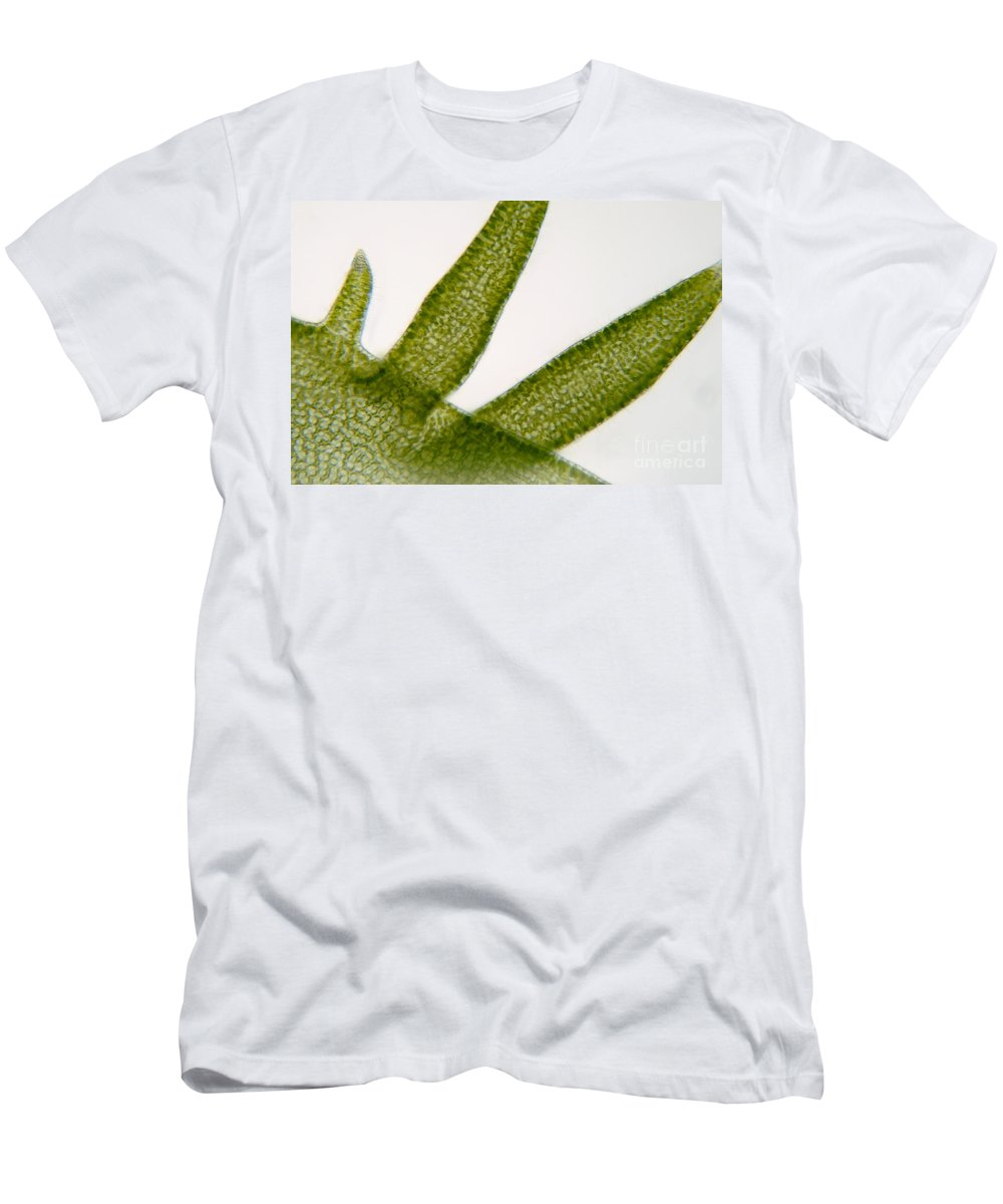 Seaweed Men's T-Shirt (Athletic Fit) featuring the photograph Seaweed by Raul Gonzalez Perez