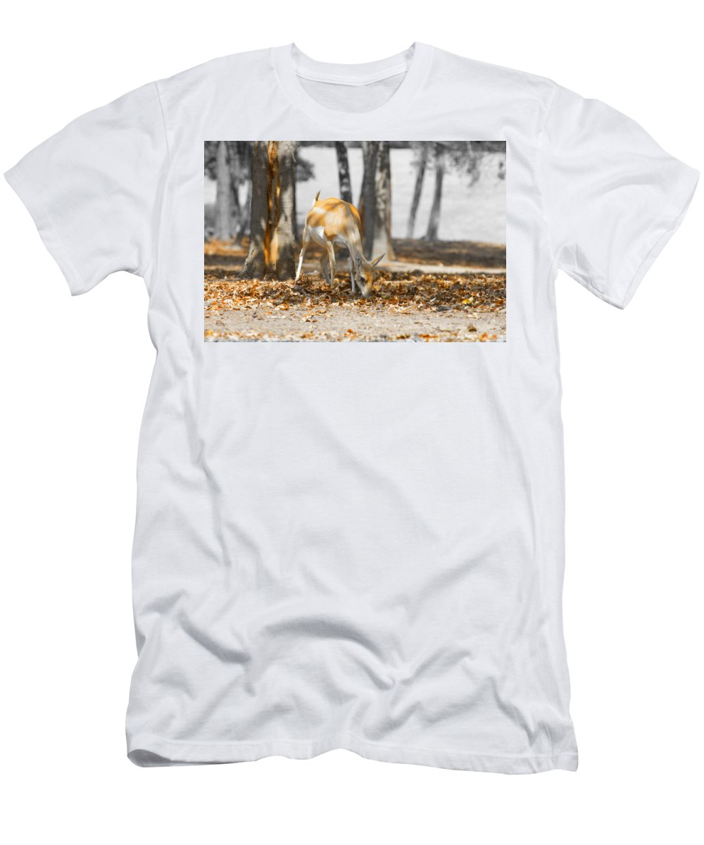 Grazing Impala Men's T-Shirt (Athletic Fit) featuring the photograph Shaded Grazing by Douglas Barnard
