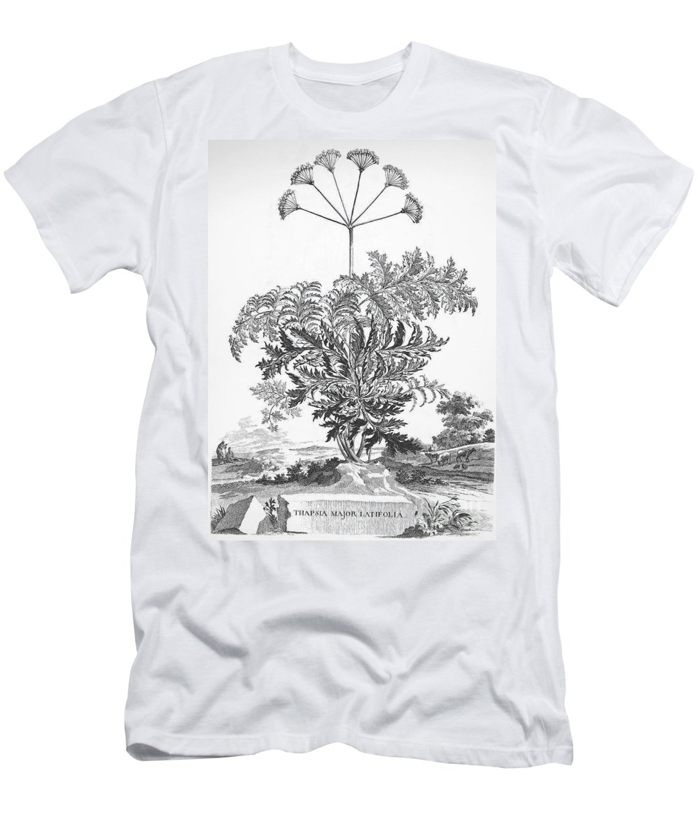 1696 Men's T-Shirt (Athletic Fit) featuring the photograph Thapsia Major Latifolia by Granger