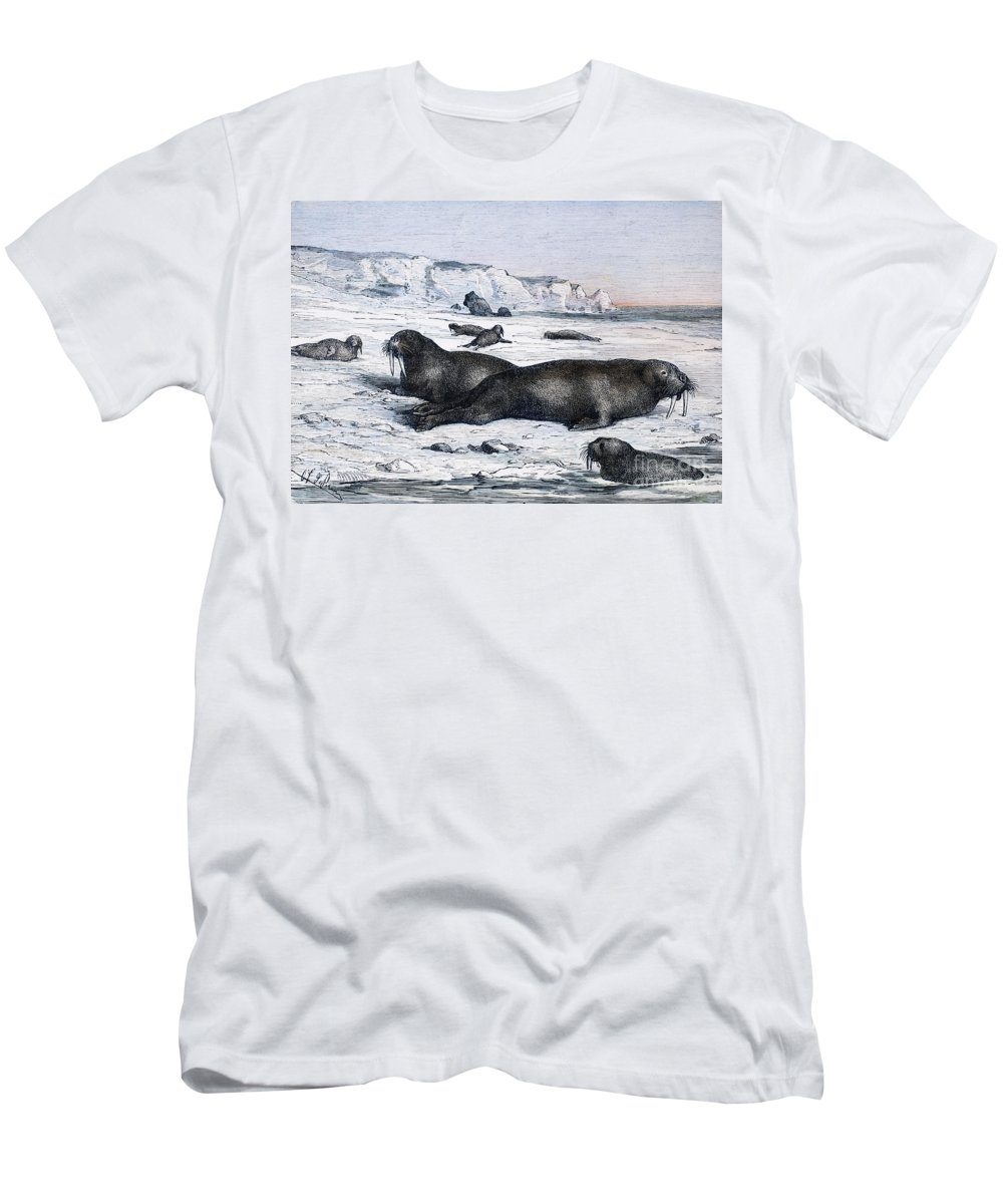 19th Century Men's T-Shirt (Athletic Fit) featuring the photograph Walruses On Ice Field by Granger