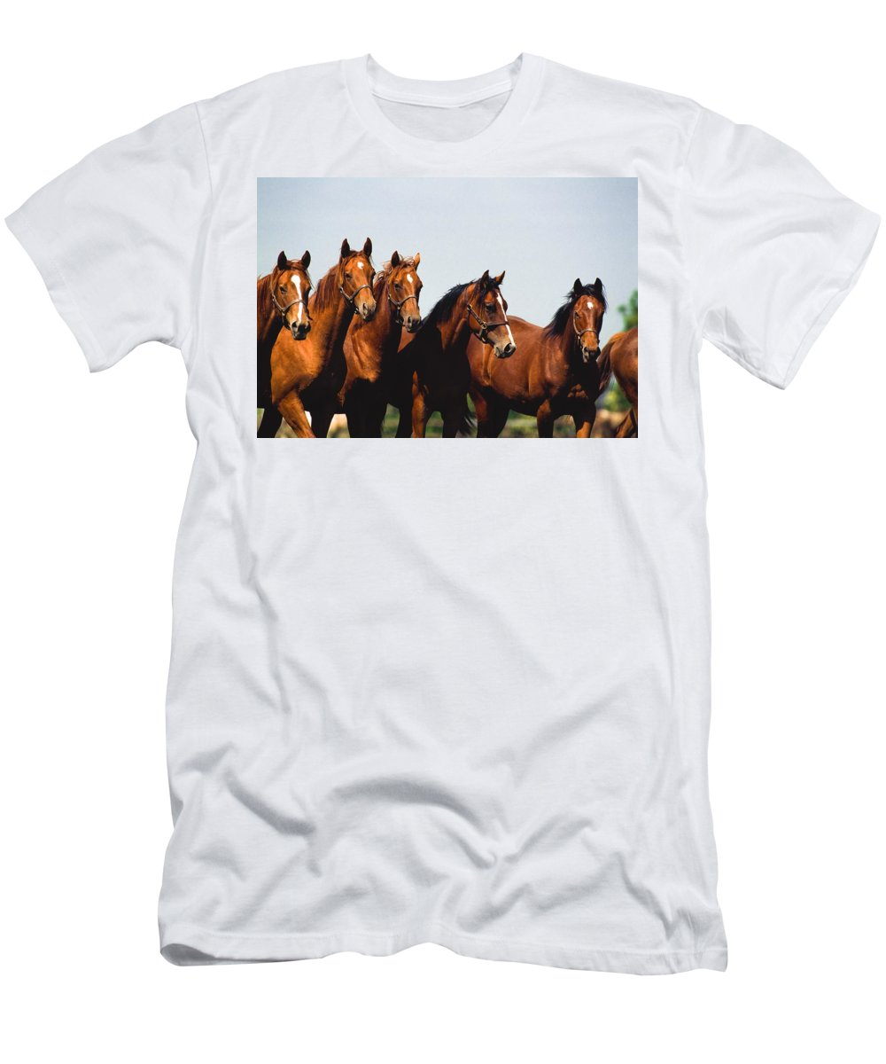 Blue Sky Men's T-Shirt (Athletic Fit) featuring the photograph Yearling Thoroughbred by The Irish Image Collection