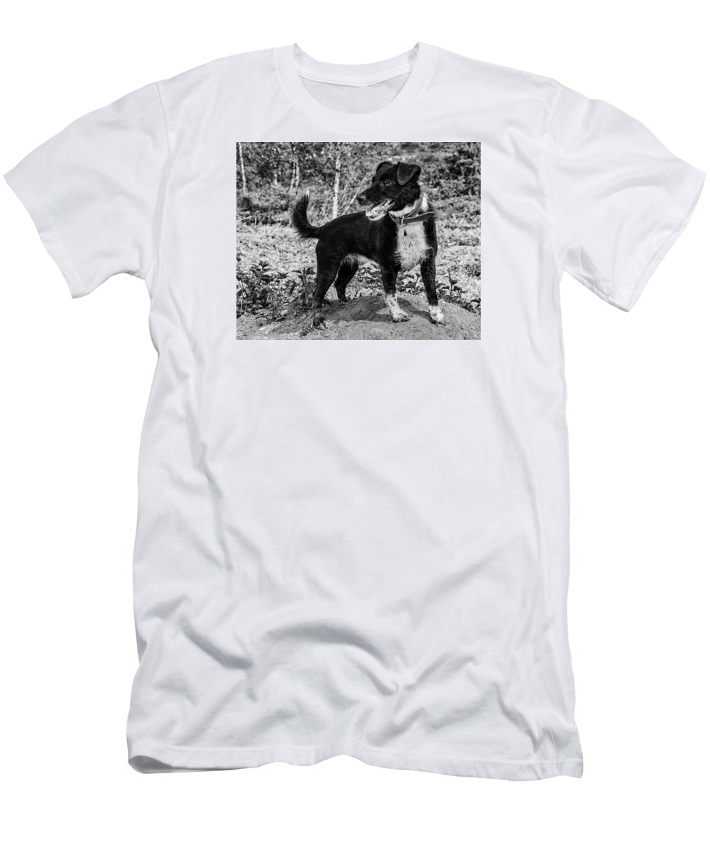 Dog Men's T-Shirt (Athletic Fit) featuring the photograph Hound On A Mound by Nick Bywater