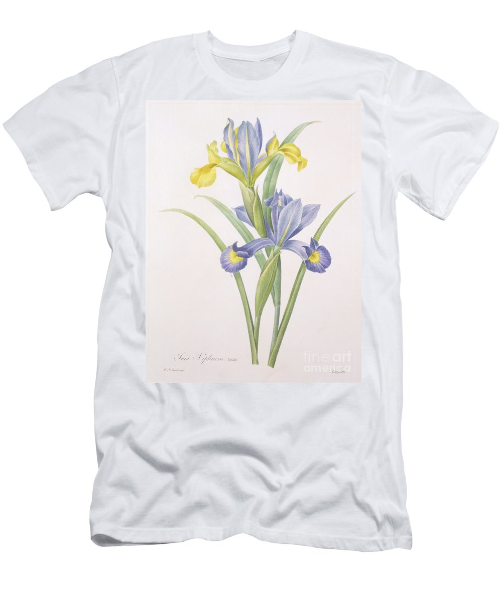 Iris Men's T-Shirt (Athletic Fit) featuring the drawing Iris Xiphium by Pierre Joseph Redoute