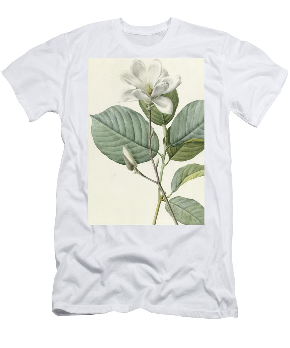 Magnolia Men's T-Shirt (Athletic Fit) featuring the painting Magnolia by Pierre Joseph Redoute
