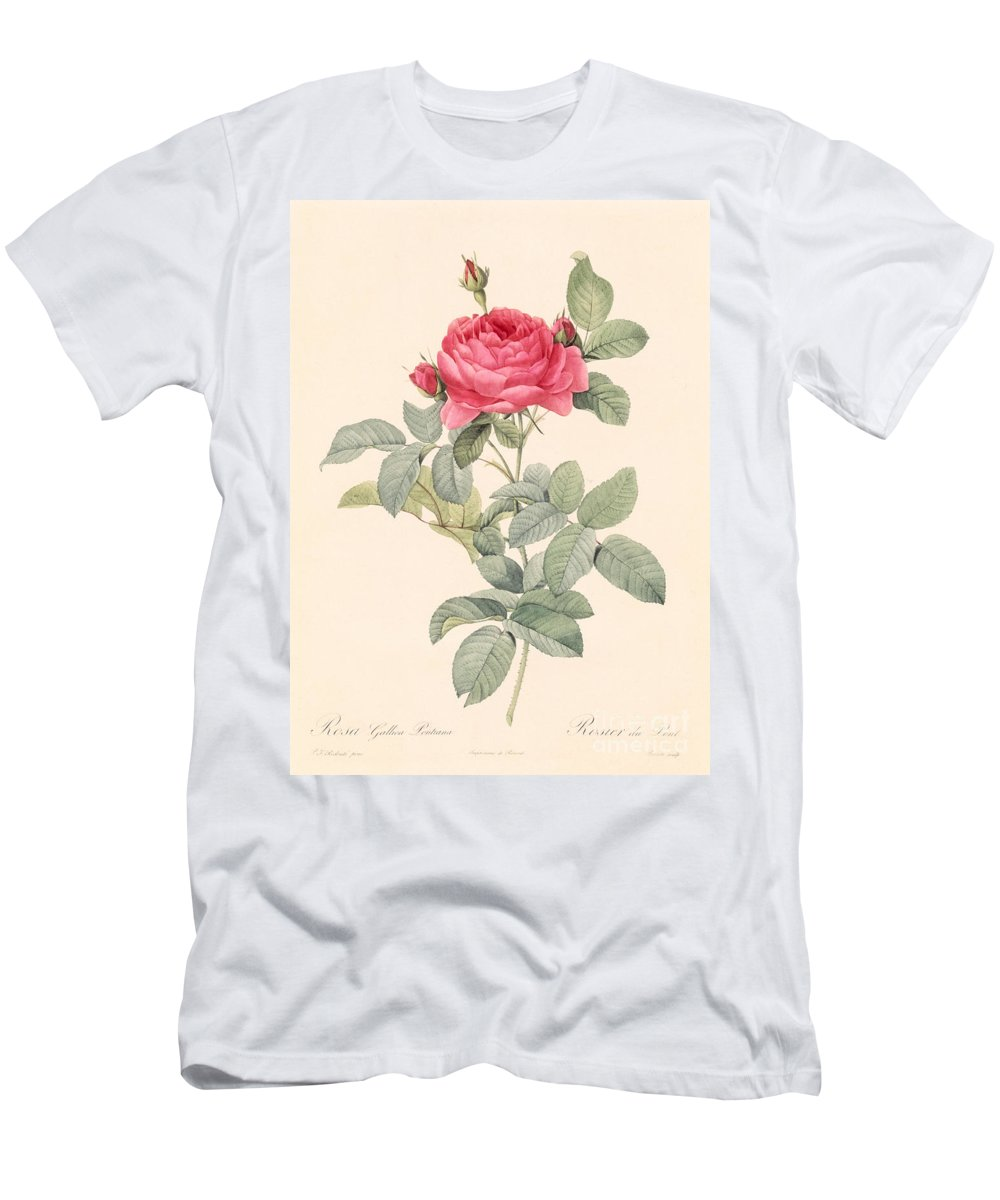Rosa Men's T-Shirt (Athletic Fit) featuring the drawing Rosa Gallica Pontiana by Pierre Joseph Redoute