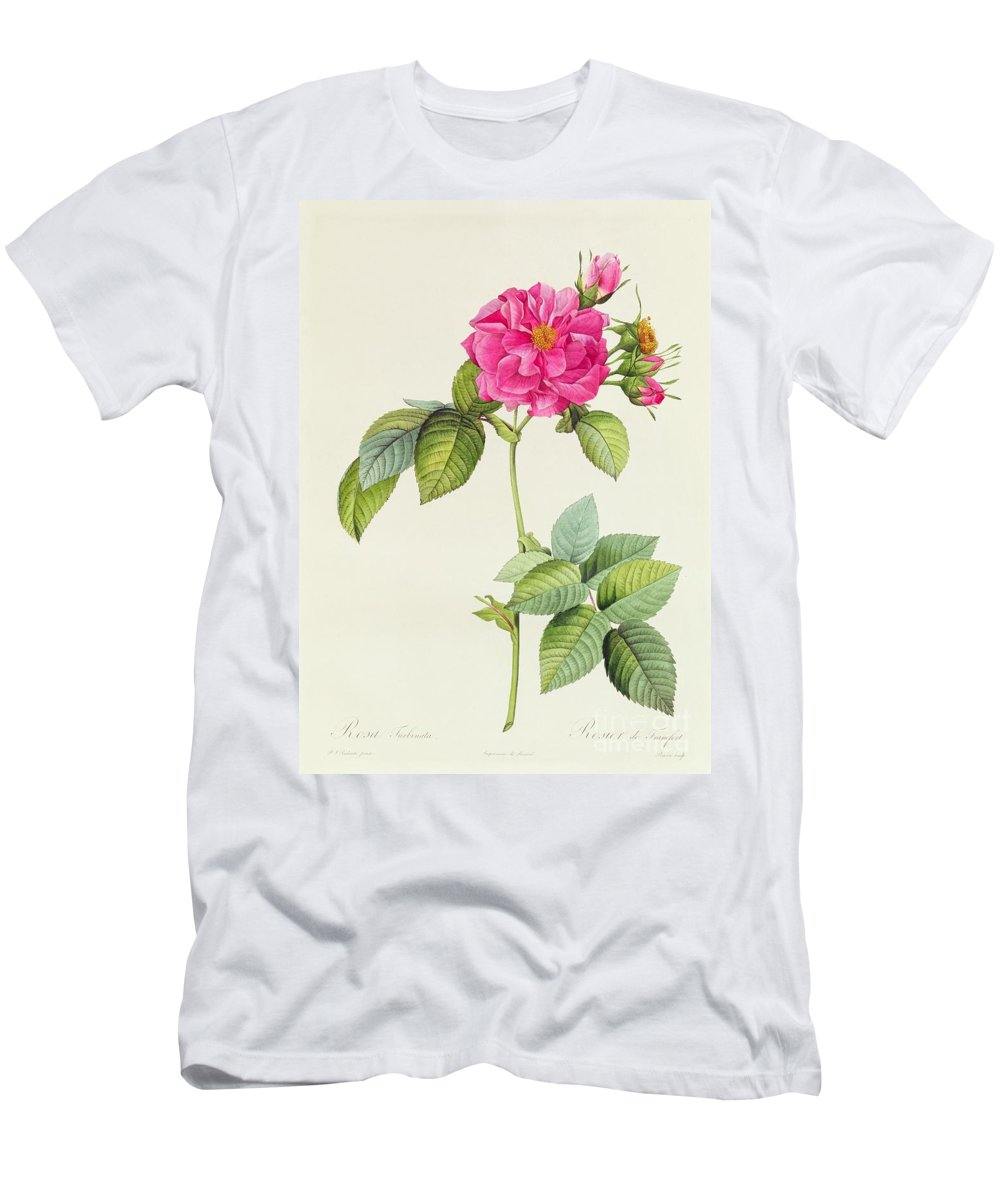 Rosa Men's T-Shirt (Athletic Fit) featuring the drawing Rosa Turbinata by Pierre Joseph Redoute