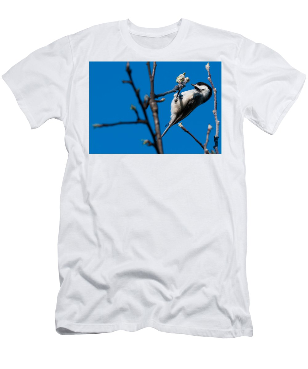 Bird Men's T-Shirt (Athletic Fit) featuring the photograph The Chickadee by Heather Hubbard