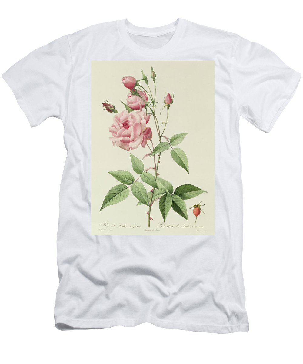 Rosa Men's T-Shirt (Athletic Fit) featuring the drawing Rosa Indica Vulgaris by Pierre Joseph Redoute