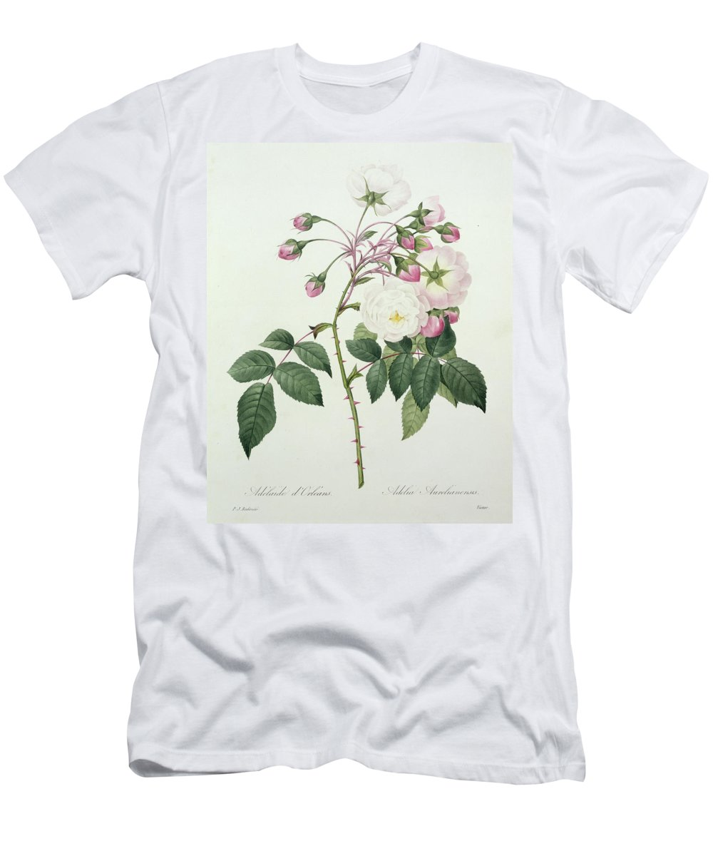 Adelia Men's T-Shirt (Athletic Fit) featuring the drawing Adelia Aurelianensis by Pierre Joseph Redoute