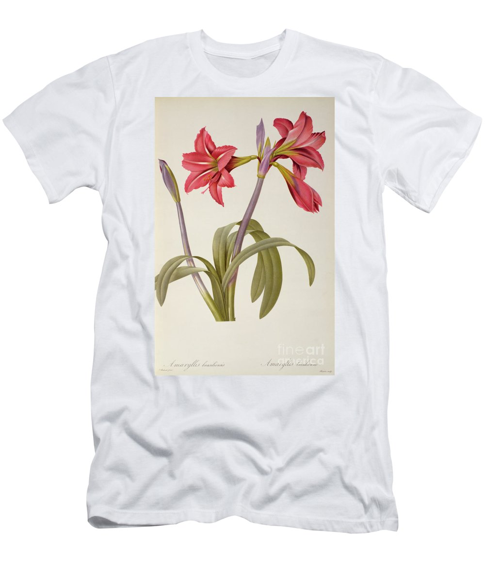 Amaryllis T-Shirt featuring the drawing Amaryllis Brasiliensis by Pierre Redoute