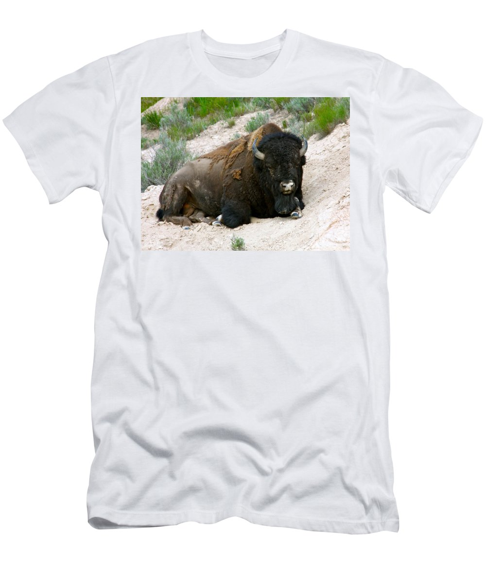 America Men's T-Shirt (Athletic Fit) featuring the photograph American Bison by Karon Melillo DeVega