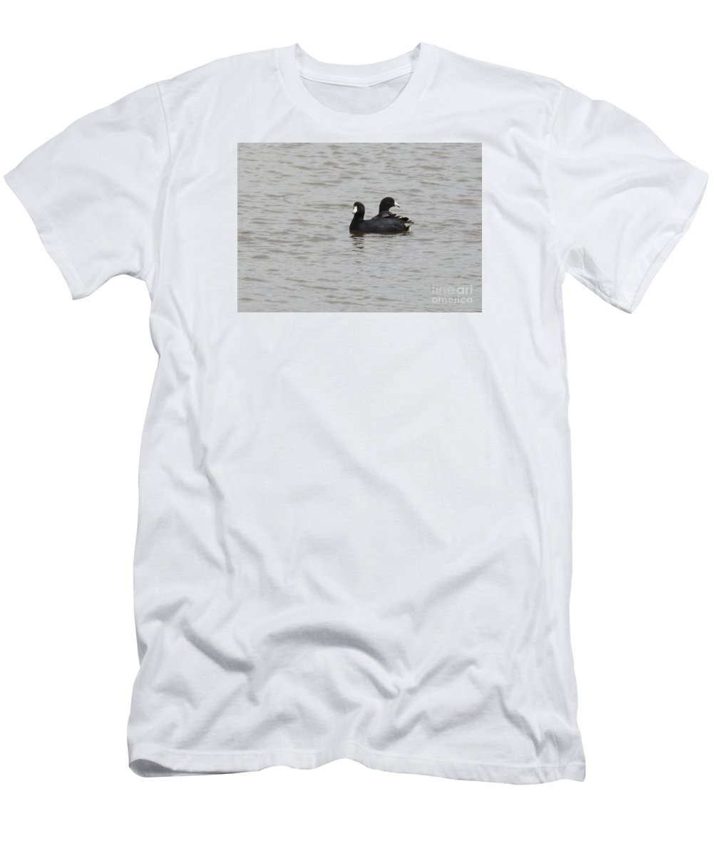 American Coots Prints Men's T-Shirt (Athletic Fit) featuring the photograph American Coots by Ruth Housley