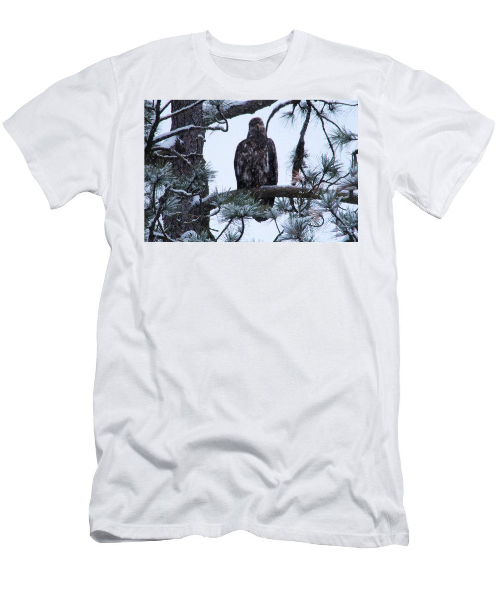 Bald Eagle Men's T-Shirt (Athletic Fit) featuring the photograph An Eagle Gazing Through Snowfall by Jeff Swan