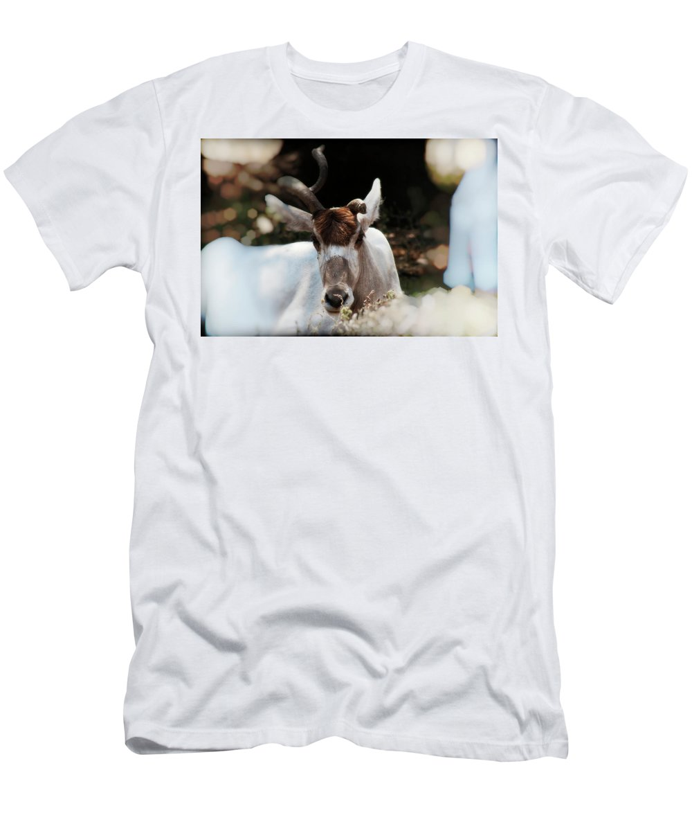 Buck Men's T-Shirt (Athletic Fit) featuring the photograph Battle Scarred by Douglas Barnard