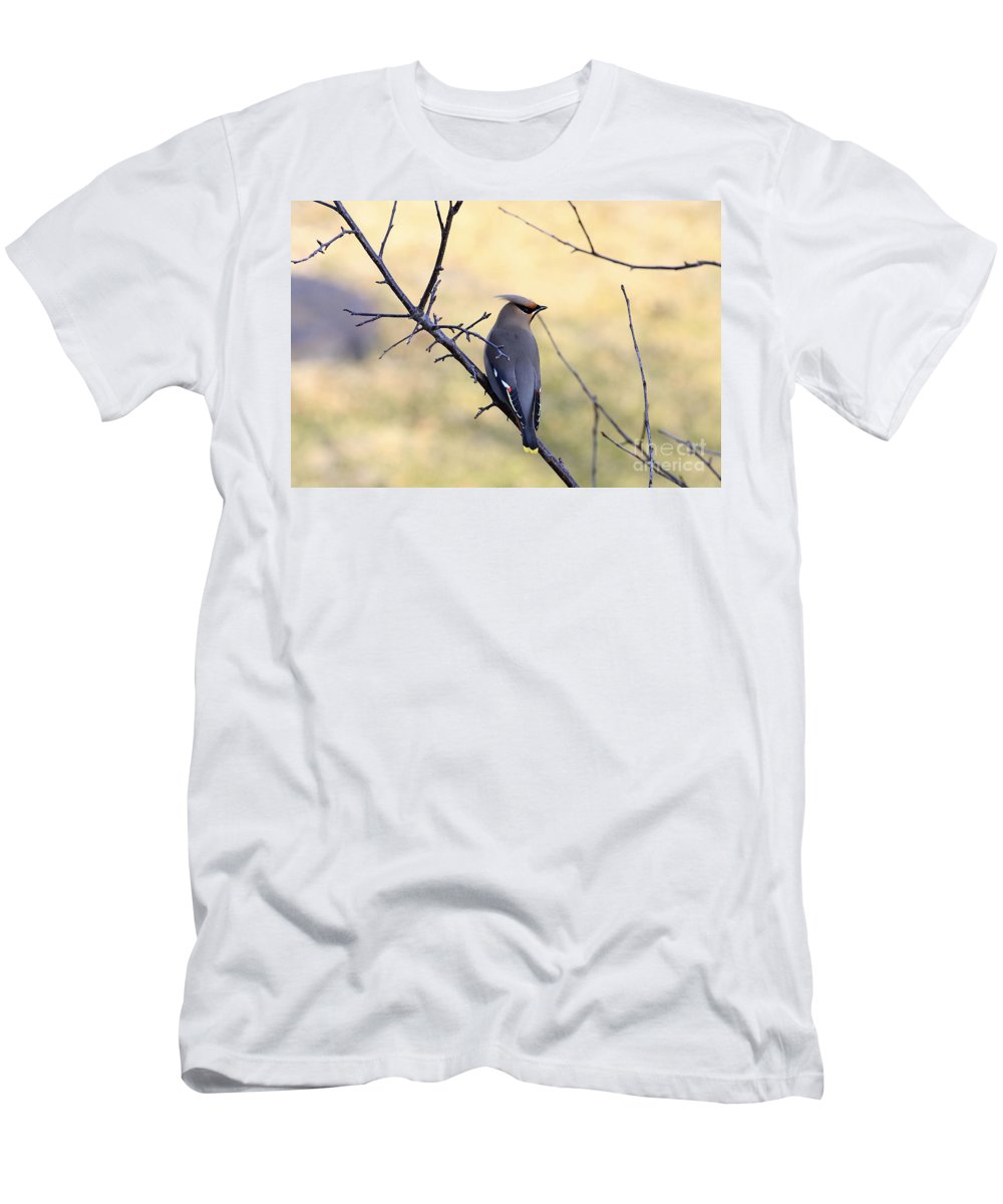 Waxwing Men's T-Shirt (Athletic Fit) featuring the photograph Bohemian Cedar Waxwing In Spring by Deborah Benoit