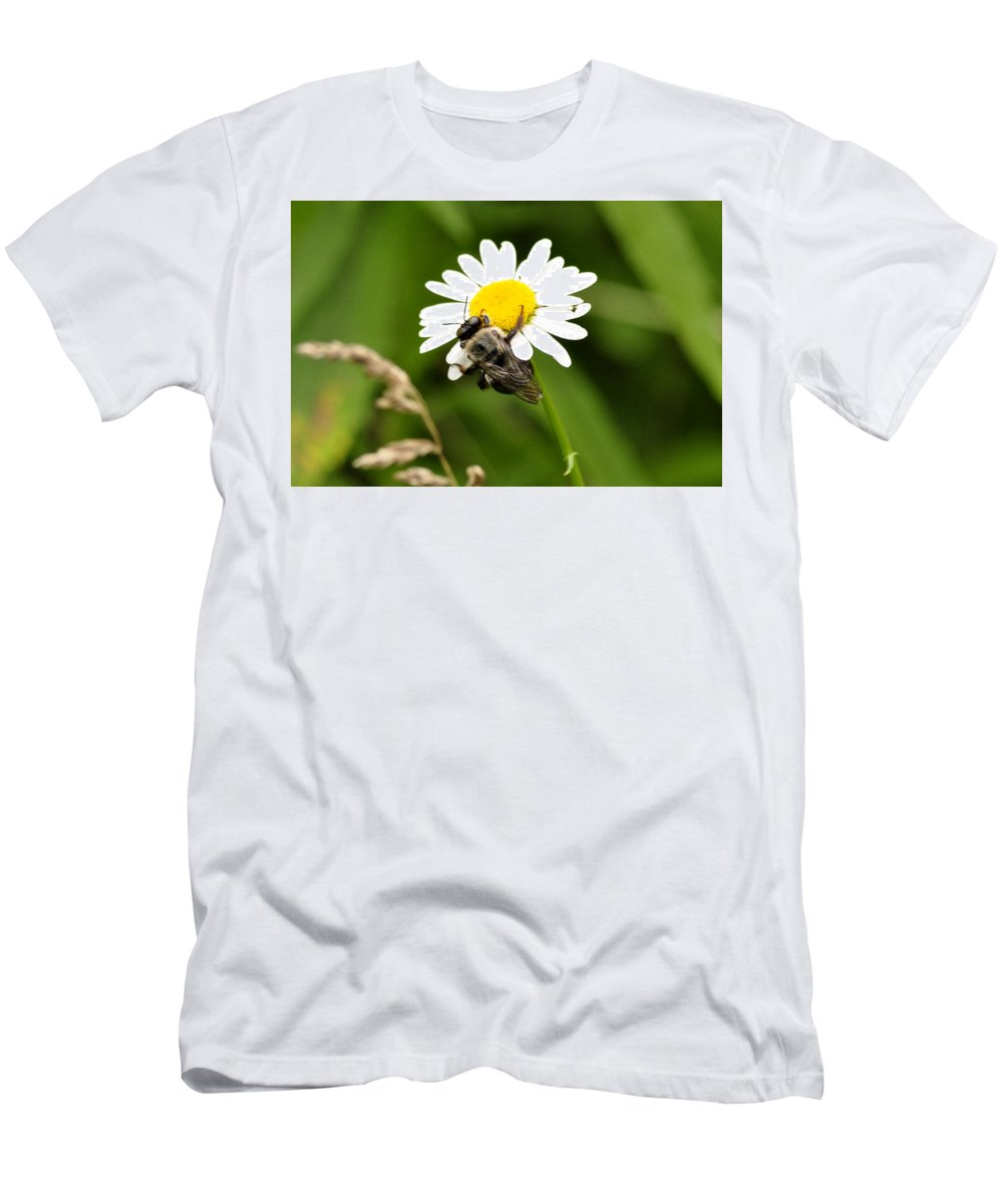 Bee Men's T-Shirt (Athletic Fit) featuring the photograph Busy Bee by David Kelso