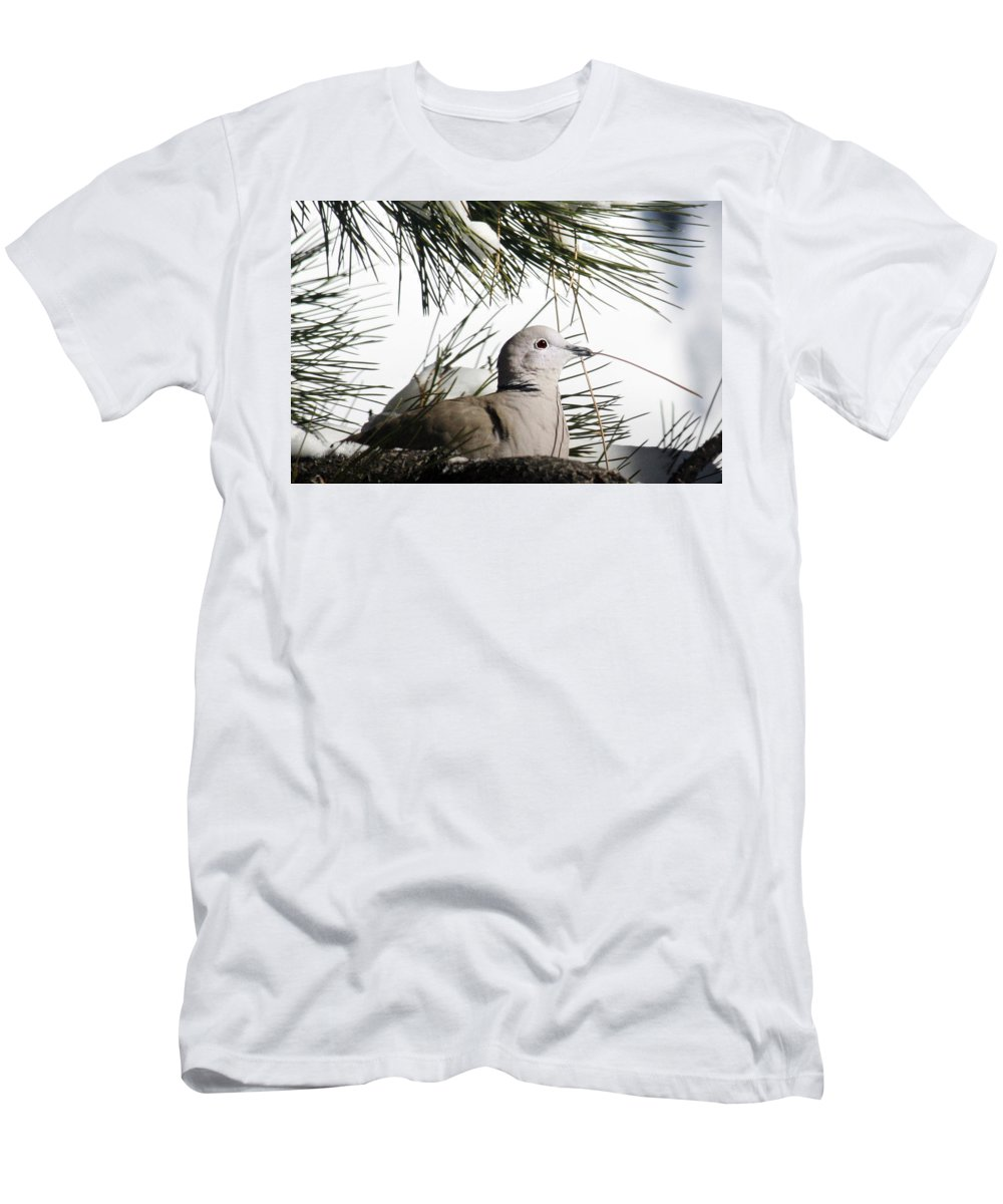 Close-up Men's T-Shirt (Athletic Fit) featuring the photograph Close Up African Collared Dove by Marilyn Hunt