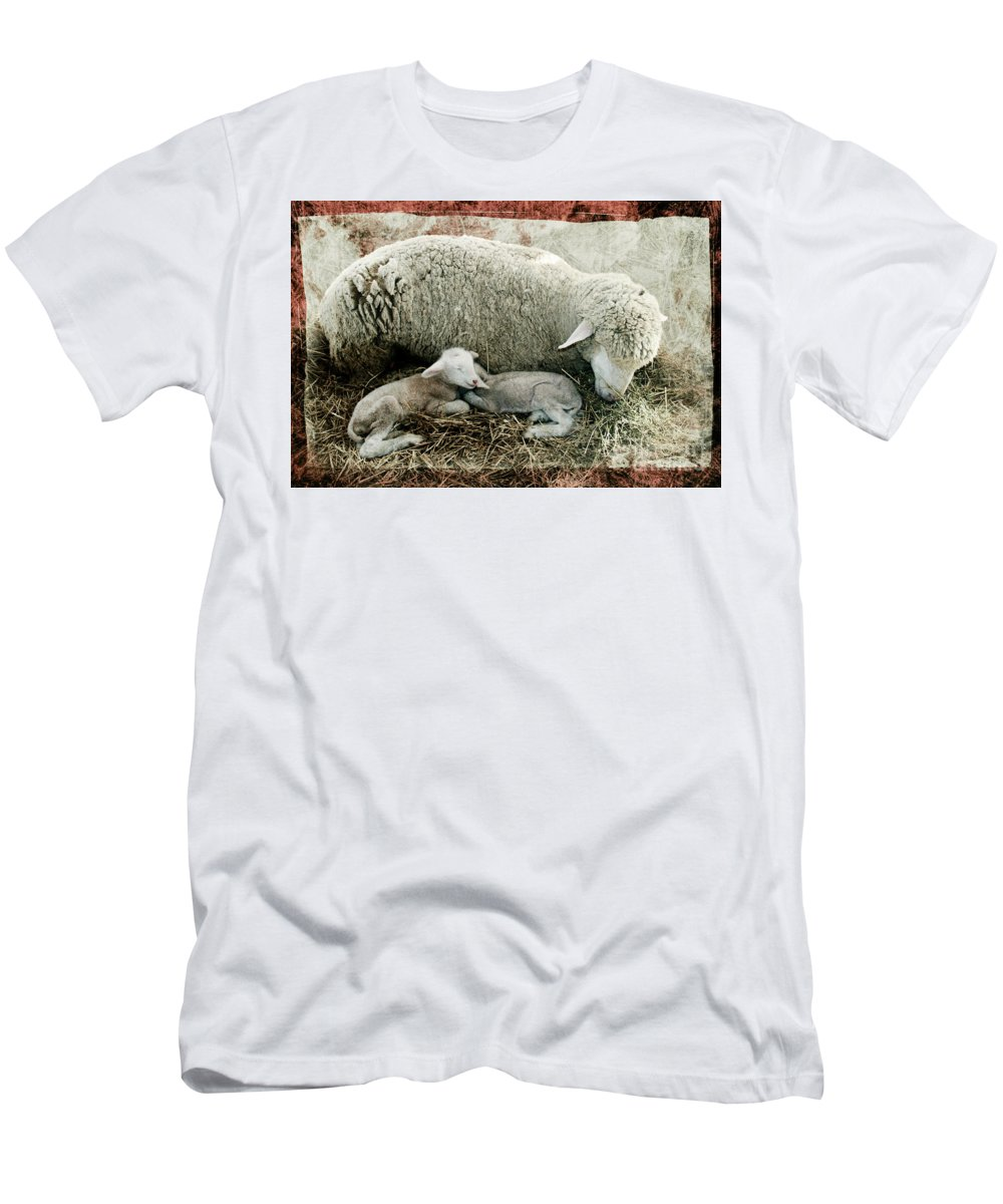 Sheep Men's T-Shirt (Athletic Fit) featuring the photograph Counting Sheep by Sari Sauls