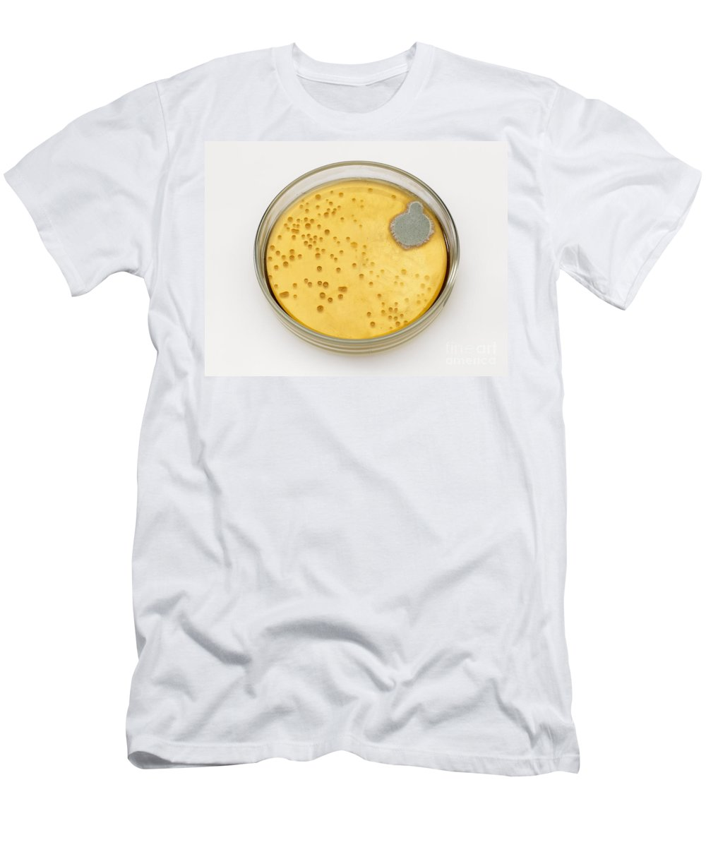 Culture Plate Men's T-Shirt (Athletic Fit) featuring the photograph Culture Plate Of Penicillium Mold by Wellcome Images