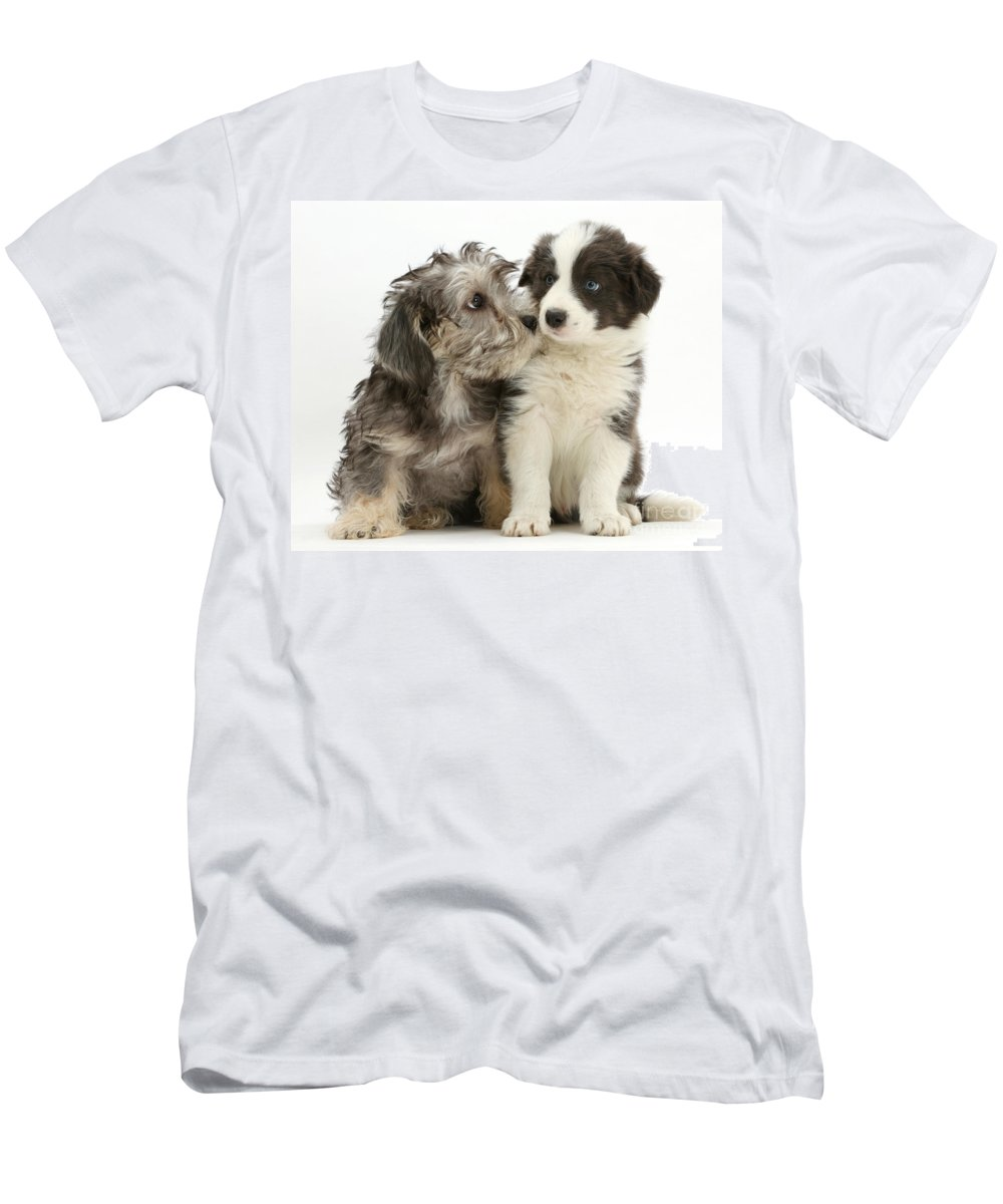 Nature Men's T-Shirt (Athletic Fit) featuring the photograph Dandy Dinmont Terrier And Border Collie by Mark Taylor